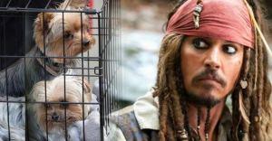 Depps-dogs