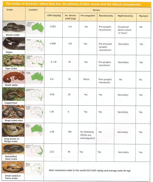 snakes-of-australia